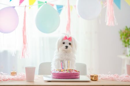 Cute dog with bow and birthday cake